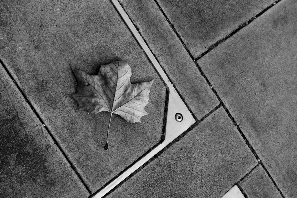 A leaf in London. Shot on the doorstep of The Tate.