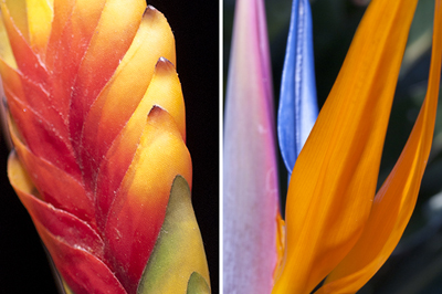 Vibrant flowers thriving in the gardens of the Fairmont Zimbali Resort and Lodge