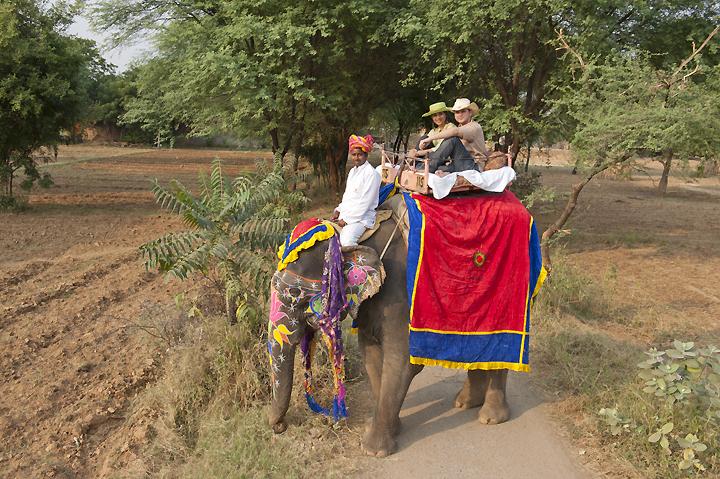 elephant trekking by Michelle Chaplow