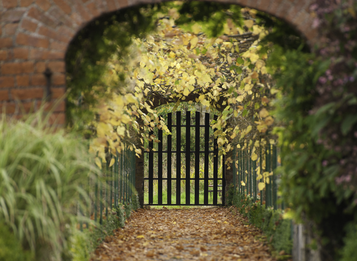 Photographing the Autumnal Archways