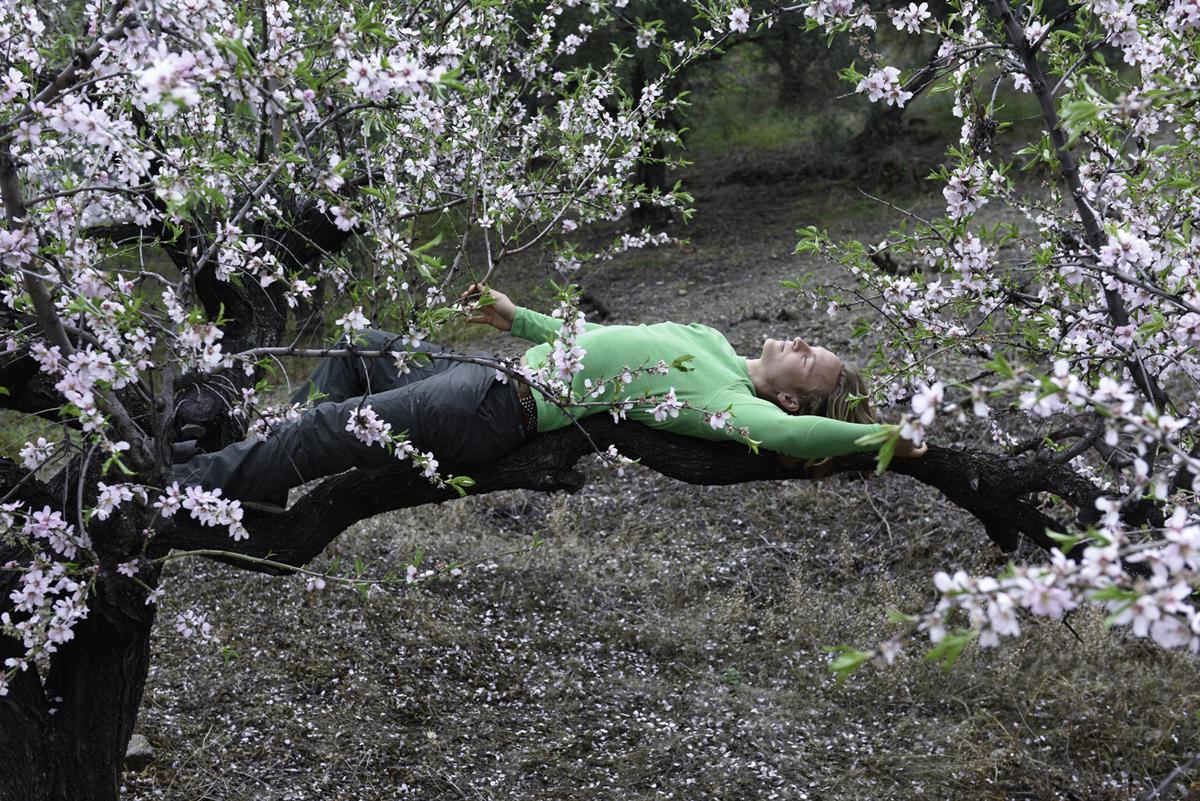 Intertwining Blossom Tree